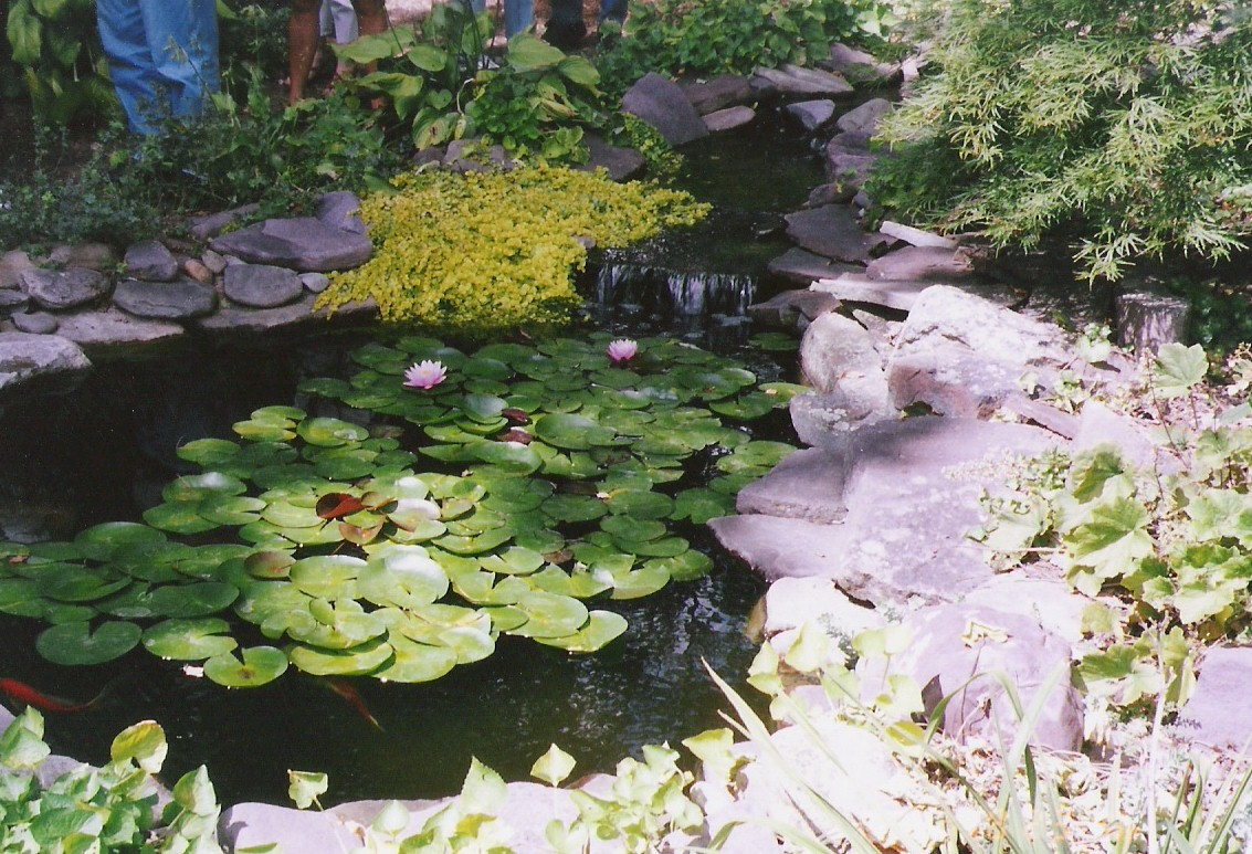 A love for fish ponds on pinterest ponds small backyard for Small round pond